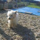Pozdravite najlepšega psa v celi Boračevi,Sloveniji,Evropi in na celem svetu!