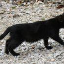 Še en črn mladiček, na sliki se to ne vidi, ampak izredno majhen je za predvideno starost