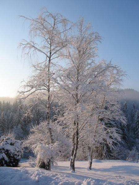 Breze v snegu; februar 2005