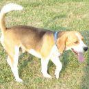 beagle party