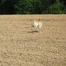 Divjanje po polju