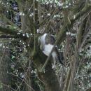 Potem sem skočila na drevo ..