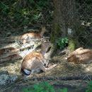 Te živali sem posnel v Sp.kokri pri CELARJU.