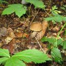Okoli jame rastejo tudi gobe