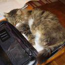 Poglej,kako lepo pašem v tale kuferček!