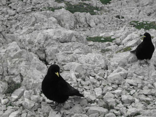 Kranjska Rinka - 30.06.2010 - foto