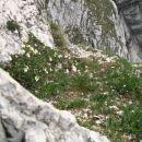 Na vrhu prehoda (lepe rožice) v smeri nadaljevanja