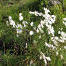 Vse je šelestelo v vetru, od smrek, trav do teh lepih puhovk, vendar žal nisem razumel nji