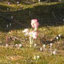 pomlad na notranjskem