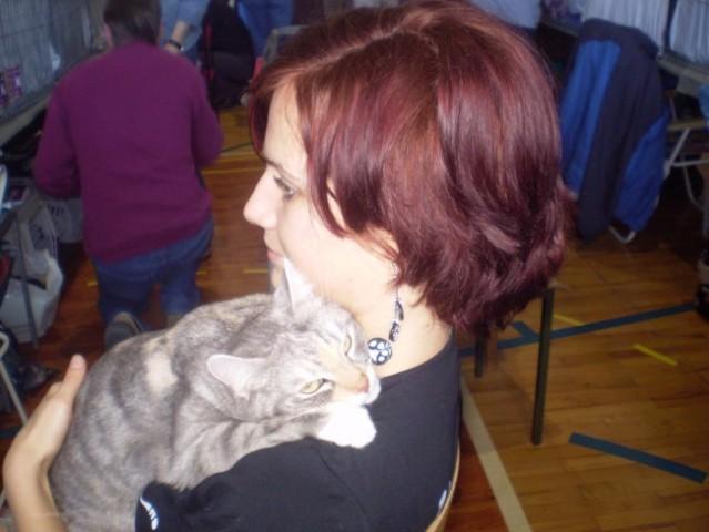 Mačja razstava - foto