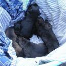 3 punčke in 2 fantka, stari cca 14 dni