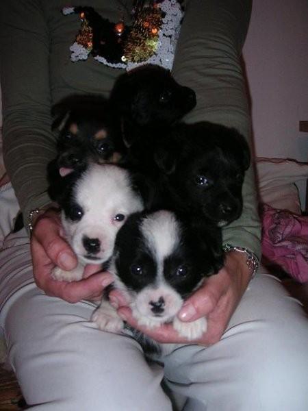 5 mladičkov, stari cca 6 tednov, oddani