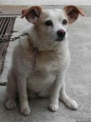 10 letna psička, majhna, zelo prijazna, sterilizirana išče nov dom