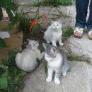 3 mucke iščejo nov dom. 01/2310515 040/622500