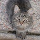 Ker je od sosedove mačke sin,  je pa na polnem penzionu pri nas, smo mu dali ime Jurčič (s