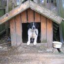 Prijazen kuža Tobi išče dom.