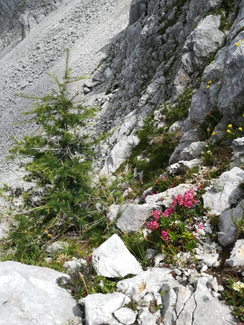Ljubelj-Zelenica-Vrtača+FerataSp.plot-28.7.19 - foto