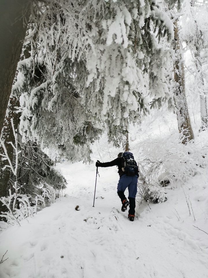 Pohod Sleme-Uršlja gora(1699m)-27.12.2020 - foto povečava