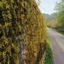 Zidani Most-V.Kozje-Lovrenc-Lisca-Breg-1.5.21