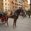 konj..hehe
