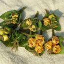 Javorjeve vrtnice