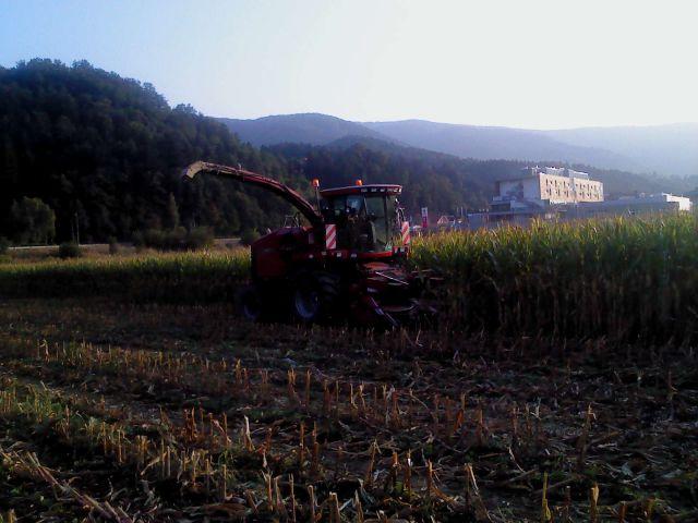 Siliranje 2011 - foto