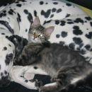 Mali Šiško-zdaj Smokey-po dveh mesecih bivanja v novem domu! :)
