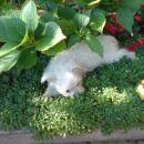 Kok je lušno na vrtu spat