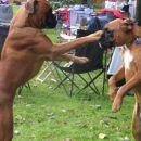 Bratska ljubezen - kot v ogledalu!