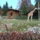 Živalski vrt Oktober 2007
