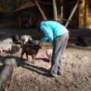 jaz in prašički ter kozice