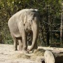 slonica Ganga