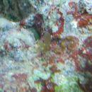 zelen listek (spet neka alga, ki je prišla s kamnom) - jo je treba odstraniti?